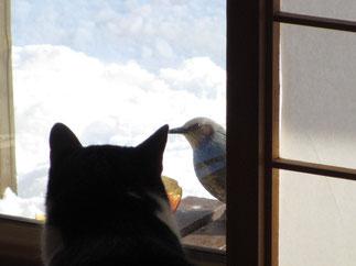 農園のかわいい猫ねこ!画像