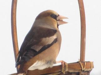 農園のかわいい動物鳥たちシメ画像