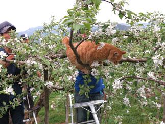 リンゴの花と猫
