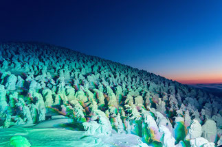 蔵王の樹氷の群れの画像