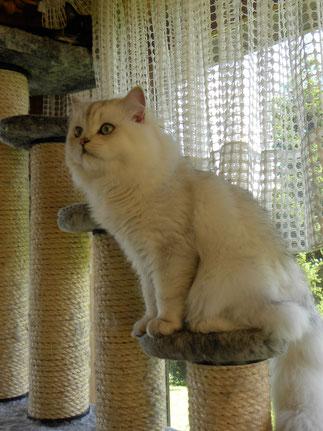 Balou, fast 14 Monate alt (Foto: 19.08.2014)