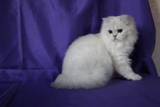 Bianca, 11 Monate (Foto: 11.12.2016)