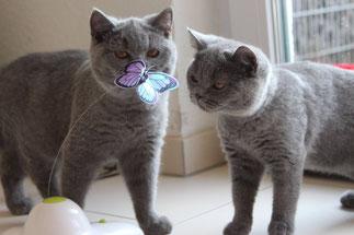 Orwell (links) mit seiner Schwester Ophira (Foto: 19.02.2015)