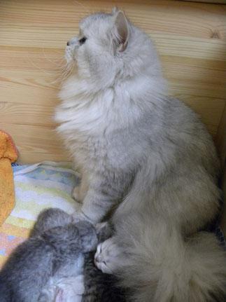 Kalina mit ihren Kitten im Alter von 15 Tagen (Foto: 2.4.2016)