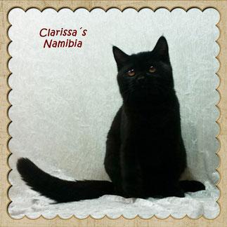 Namibia im Alter von ca. 4 Monaten