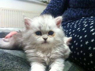 Athos im Alter von 6 Wochen