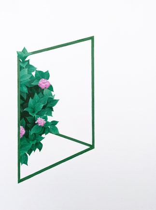 Hortensie plant bush