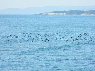 沢山の渡り鳥たち