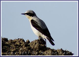 Artenliste der hier vorgestellten Vögel