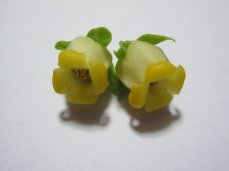 雄花 Male flowers