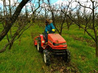 トラクター in 柿畑