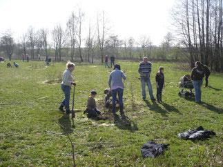 Wir pflanzen einen Buschwald am Rehberg