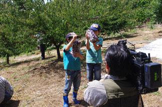 ミスなでしこⓇ  収穫体験 TV収録
