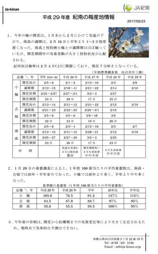 JA紀南 H29梅産地情報【2/23】