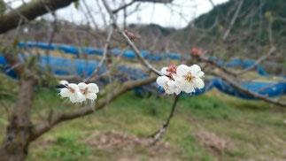 2016開花【城山台高台】
