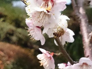 ミツバチとの共生
