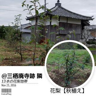 花梨【カリン】新植 和×夢 nagomu farm