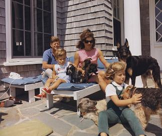 犬と暮らす事の魅力