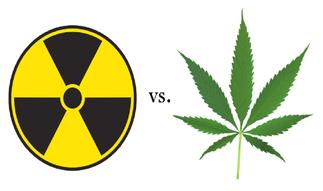 marihuana y radiacion nuclear, cannabis absorve radiacion