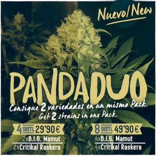 semillas marihuana feminizadas pada duo, big seeds