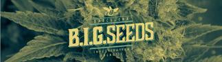 compra semillas marihuana online envio seguro