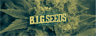 banco semillas marihuana barcelona, banco semillas cannabis big seeds barcelona
