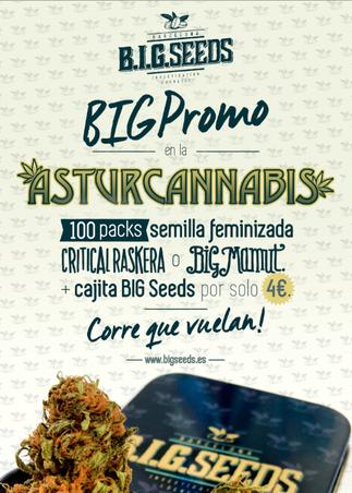 oferta semillas marihuana big seeds en asturcannabis