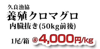 久良漁協 養殖クロマグロ 内臓抜き(50kg前後)