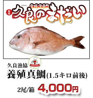 久良のまだい 久良漁協 養殖真鯛(1.5キロ前後)