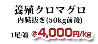 養殖クロマグロ 内蔵抜き(50kg前後)
