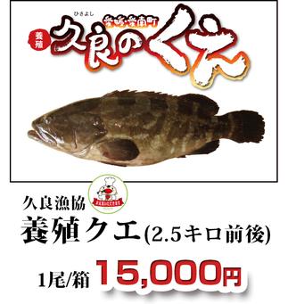 久良のくえ 久良漁協 養殖クエ(2.5キロ前後)