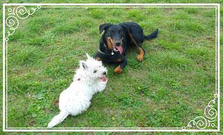 Photo de Draka pour Dog'N'Co Education canine, Conseil comportemental, Médiation animale à Til Chatel et alentours