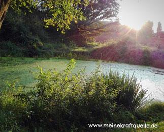 Teich im Wald, Elfenteich, magischer Teich, magischer Ort, Kraftquelle