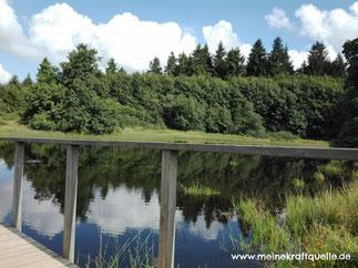 Moorsee Hoherodskopf, Waldsee