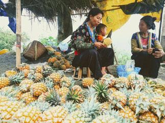 reife-frische-Ananas-richtig-schälen-Reisebericht-Vietnam-von-Moc Chau-nach-Son La Frau-schälen-frische-Ananas-mit-Messer