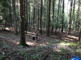 Kinder spielen im Wald. Foto: Kyra Stolp