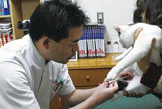 にほんまつ動物病院