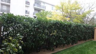 Réaménagement d'un jardinet de ville sur dalle