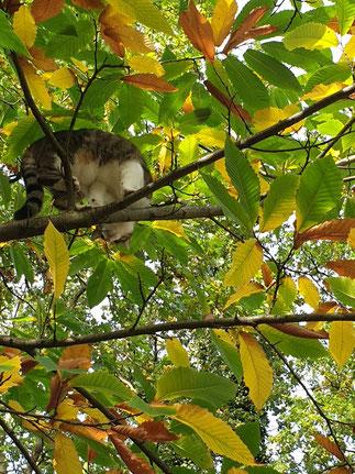Katze Hermine im Laub