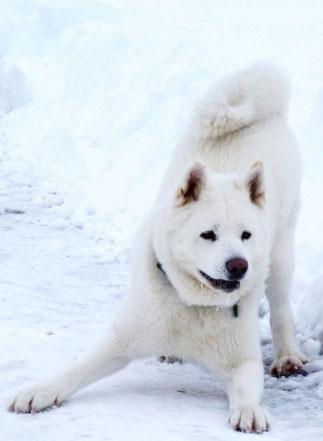 Archie Star - loves Snow