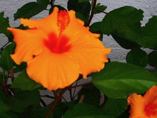 ein Blume im Regen ist nie traurig