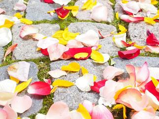 赤、黄色、ピンク、白、カラフルな花びらにしたり、1色にしたり。