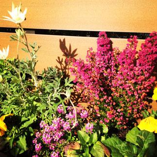 ガーデニング 草花