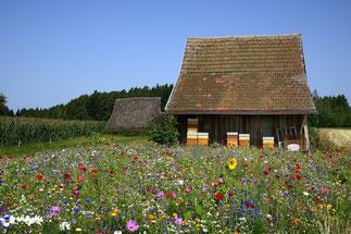 Volksinitiative Artenvielfalt Insekten retten Artenschwund stoppen NABU Düren