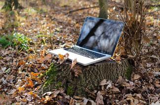 ordinateur portable posé sur une souche d'arbre