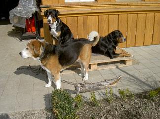 Schila, Xaffa und Babsie
