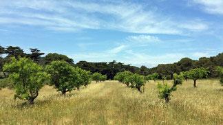 préserver une biodiversité cultivée