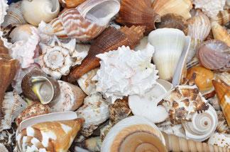 Einsiedlerhäuser Schneckenhäuser Muscheln am Strand
