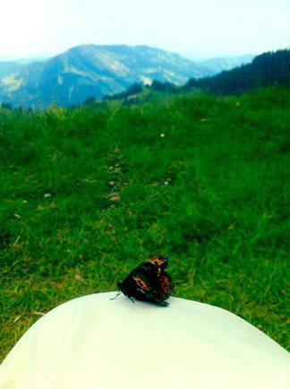 Schmetterling - Symbol der Veränderung