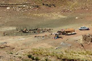Viehnomaden auf dem Weg nach Yasuj